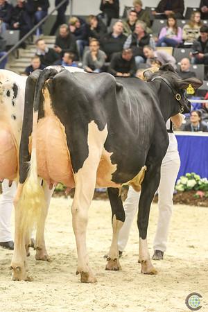Schau Der Besten Senior Cows 2018