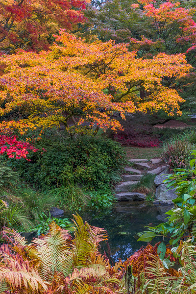 Woodland Garden in Autumn