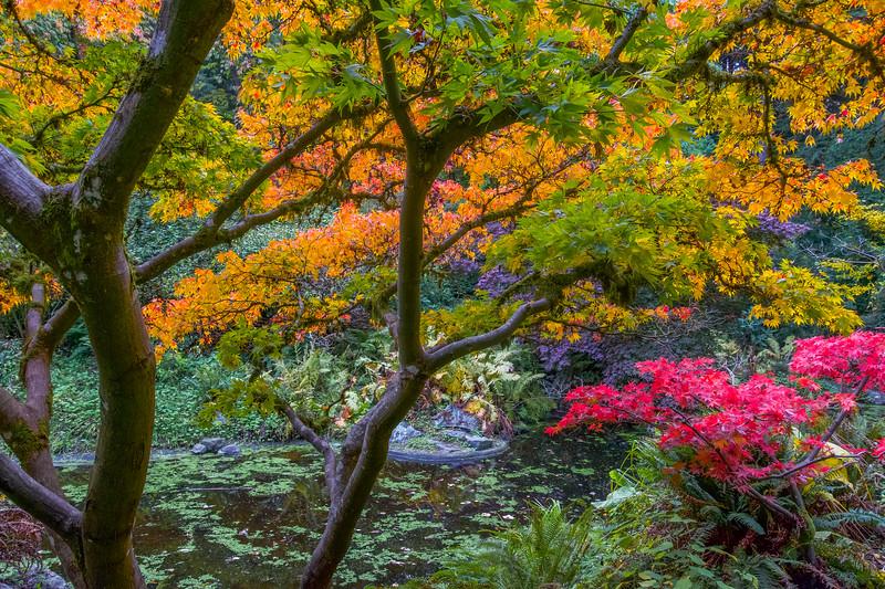 Woodland Garden Delight
