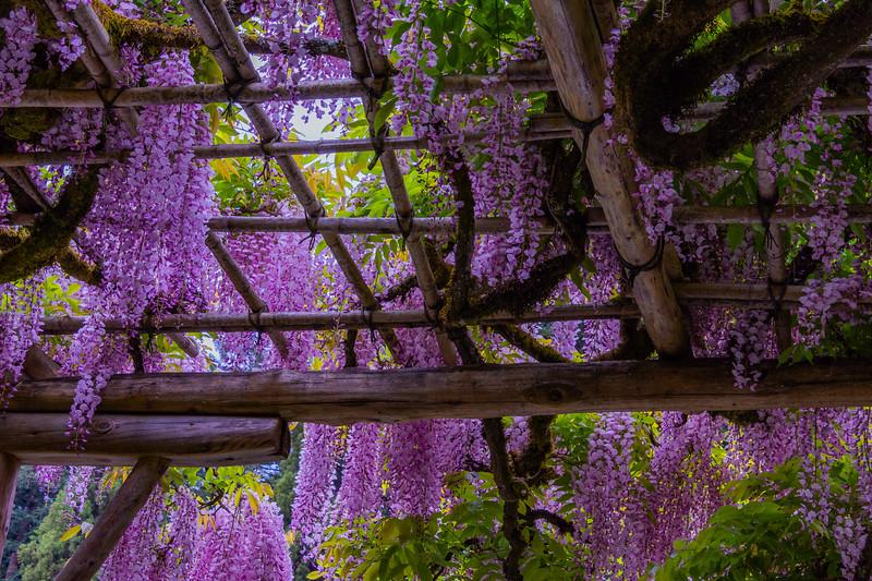 Heavenly May Flowers