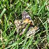 MET 083118 Butterfly