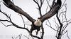 Birds along the Illinois River Road