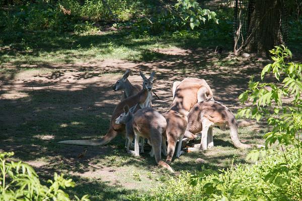 Southwick Zoo - July 2018