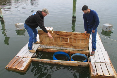 "The handmade ""upweller"" at the Great Ameican Oyster Co. nursery in the South River."