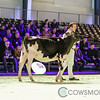 SwissExpo2018_Holstein-8796