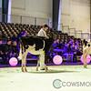 SwissExpo2018_Holstein-8795