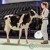 SwissExpo2018_Holstein-8800