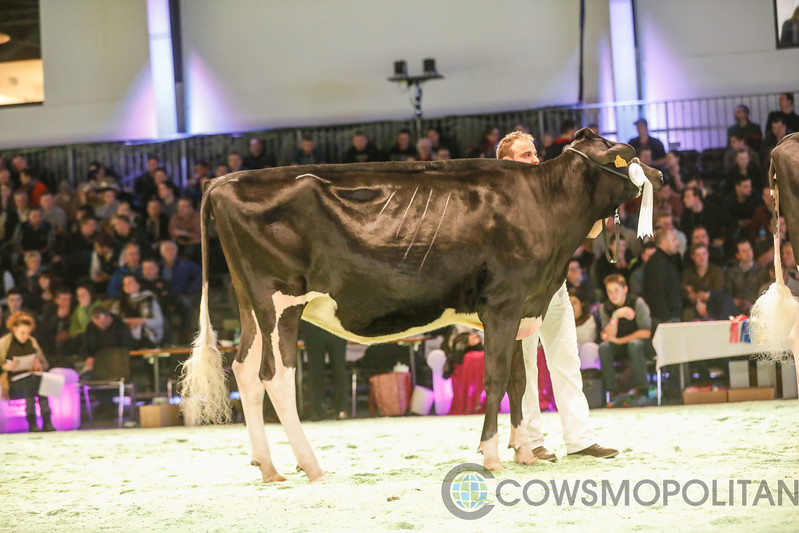 SwissExpo2018_Holstein-9514