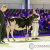 SwissExpo2018_Holstein-8794