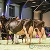 SwissExpo2018_Holstein-0030