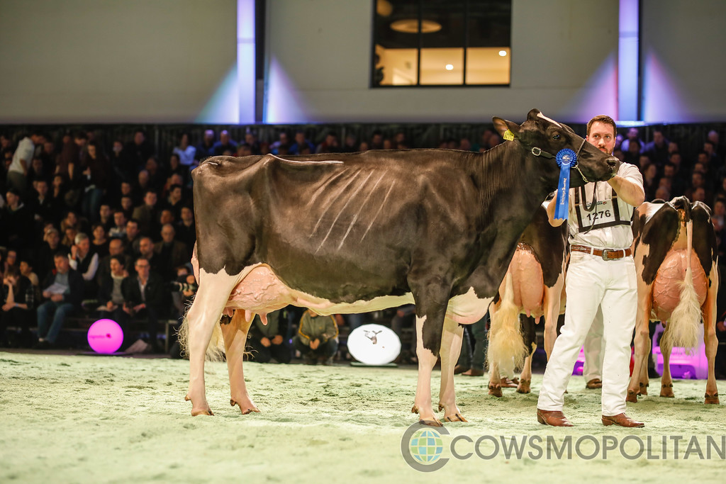 SwissExpo2018_Holstein-9728