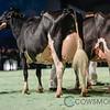 SwissExpo2018_Holstein-0011