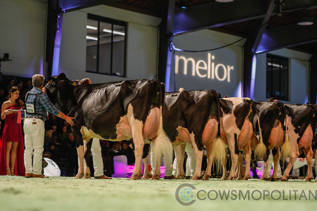 SwissExpo2018_Holstein-9702