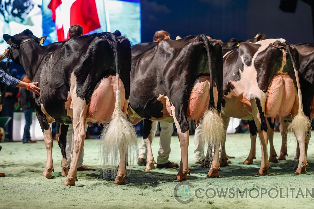 SwissExpo2018_Holstein-9689