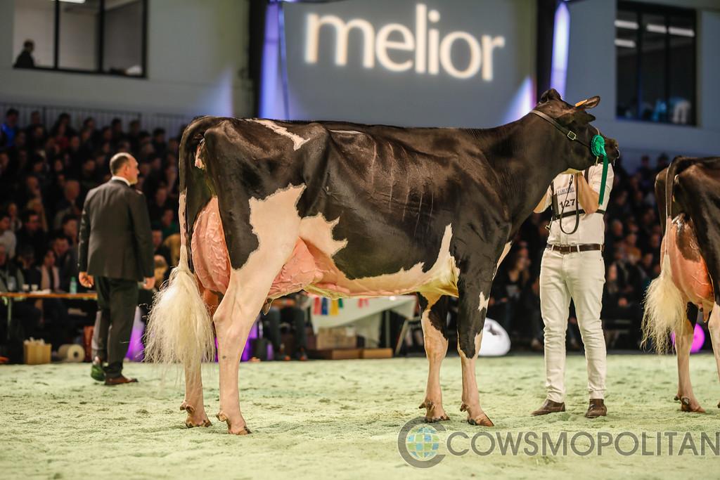 SwissExpo2018_Holstein-9746