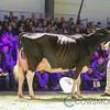 SwissExpo2018_Holstein-1046