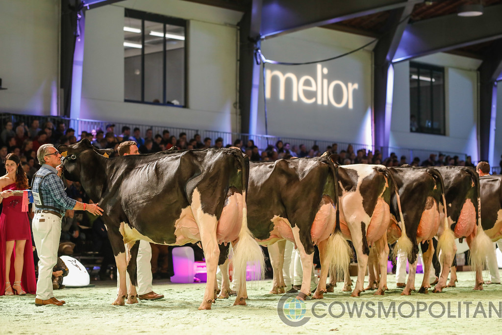 SwissExpo2018_Holstein-9705