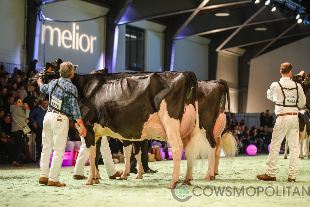 SwissExpo2018_Holstein-9694