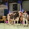 SwissExpo2018_Holstein-1001