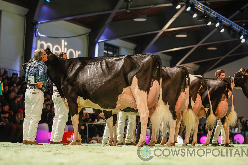 SwissExpo2018_Holstein-9701