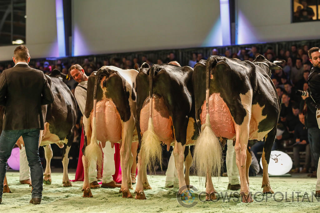 SwissExpo2018_Holstein-9718