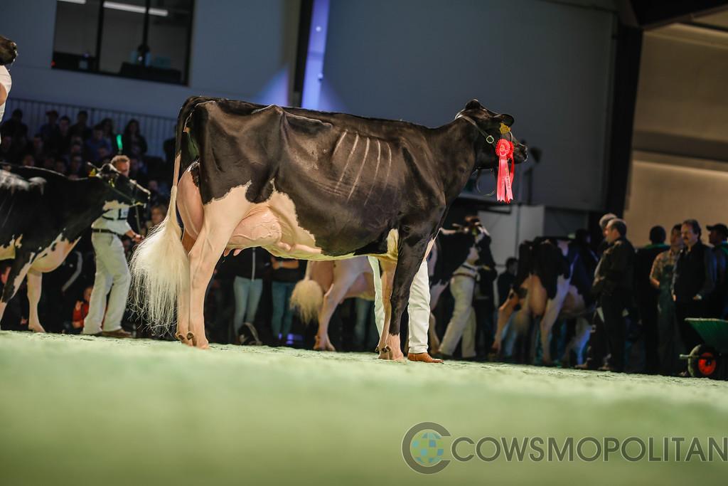 SwissExpo2018_Holstein-9738