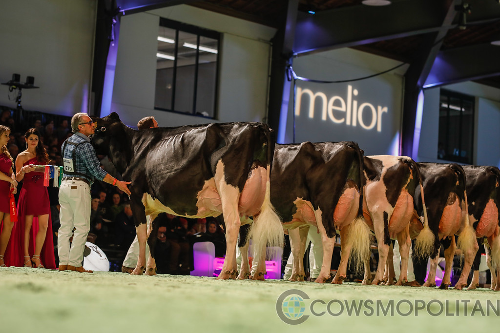 SwissExpo2018_Holstein-9703