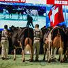 SwissExpo2018_Holstein-9693