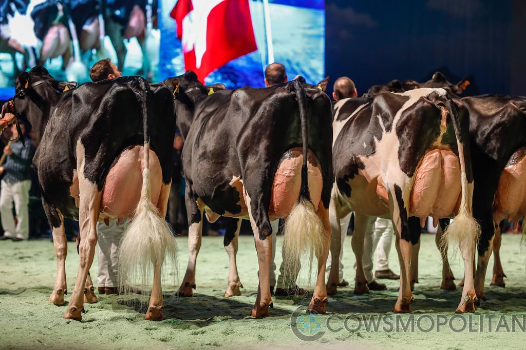 SwissExpo2018_Holstein-9688