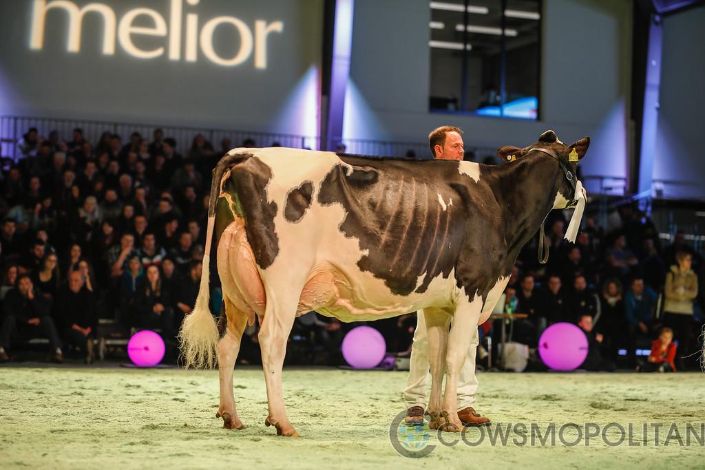 SwissExpo2018_Holstein-9744