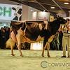 SwissExpo2018_Holstein-0001