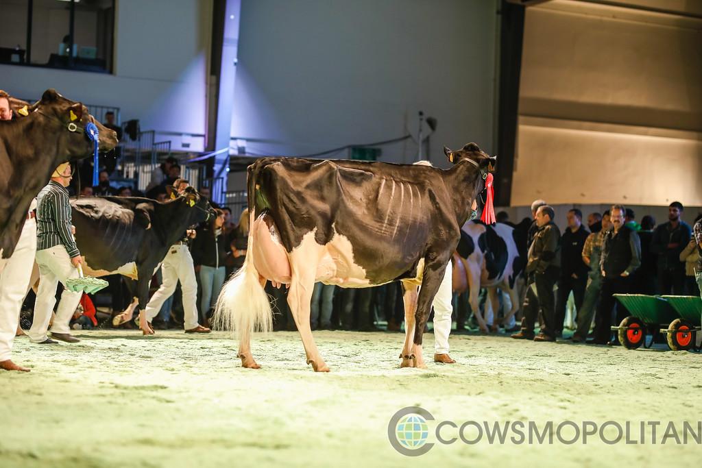 SwissExpo2018_Holstein-9741