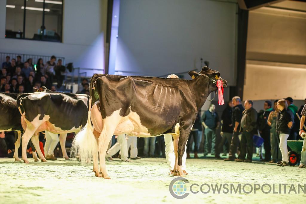 SwissExpo2018_Holstein-9734