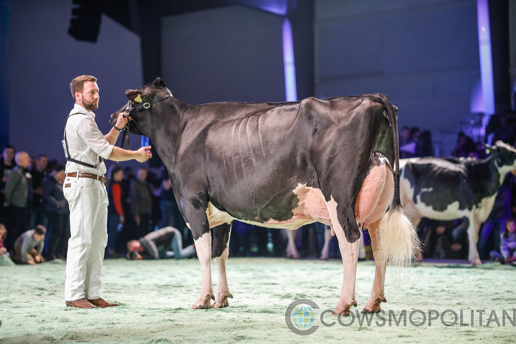 SwissExpo2018_Holstein-9748