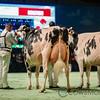 SwissExpo2018_Holstein-0970