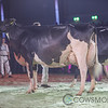 SwissExpo2018_Holstein-0270