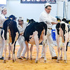 UKDairyDays18_Holstein_0608