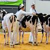 UKDairyDays18_Holstein_0609
