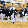 UKDairyDays18_Holstein_0604