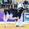 UKDairyDays18_Holstein_0601