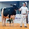 UKDairyExpo18_Holstein_6857