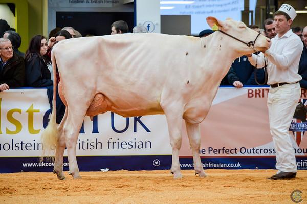 UKDairyExpo18_Holstein_6845