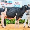 UKDairyExpo18_Holstein_6858