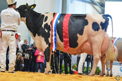 UK Dairy Expo Interbreed Championship 2018