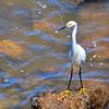 Bird in Montevideo