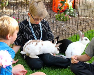Puppies & Bunny's