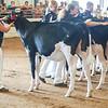 WesternNY2018-Holstein-0006