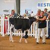 WesternNY2018-Holstein-0009