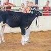 WesternNY2018-Holstein-0005
