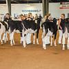 WesternNY2018-Holstein-0011